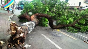 Tidak ada angin tidak ada hujan pohon tumbang menutup akses jalan