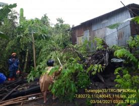 Pohon Tumbang di Purbayan Kotagede
