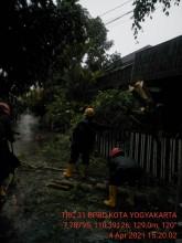 Pohon Tumbang di Jalan Bimasakti 43 Demangan Gondokusuman