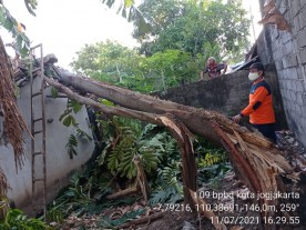 Pohon Tumbang Menimpa Atap Rumah